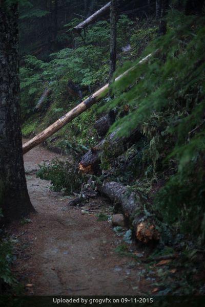 _Garibaldi Trail