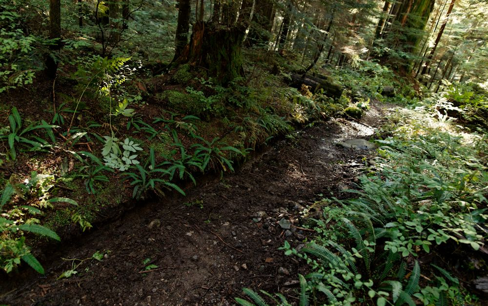 A ditched and raked section of trail
